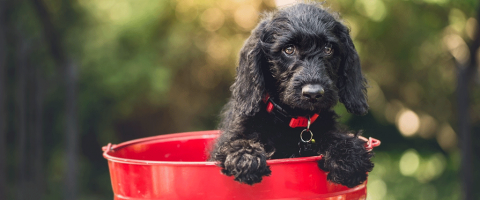 puppy care tips happy hudson animal hospital